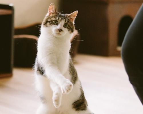 """「江戸ねこ茶屋」両国駅前すぐに保護猫と遊べる""""にゃんこカフェ"""""""