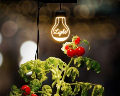 """""""おしゃれな光""""で家庭菜園が楽しめる植物栽培ライト「ルーチェ」"""