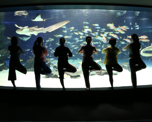 閉園後の水族館でヨガ!サンシャイン女子道×FLAVOR presents「水族館Nightヨガ」