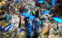 海の中で眠るお宝ワイン「VOYAGE(ヴォヤージ)」