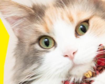 """「にゃにゃ、にゃにゃにゃ!」。え〜、""""猫社員""""を募集すると言っています!"""