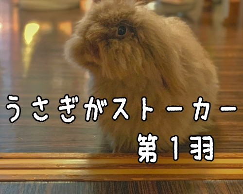 耳たれウサギにストーカーされる365の日常〜1羽目〜