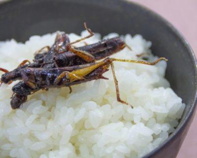 """「食用イナゴ」が大人気の""""ボーリング場""""が歌舞伎町にあるから行ってみたら?"""
